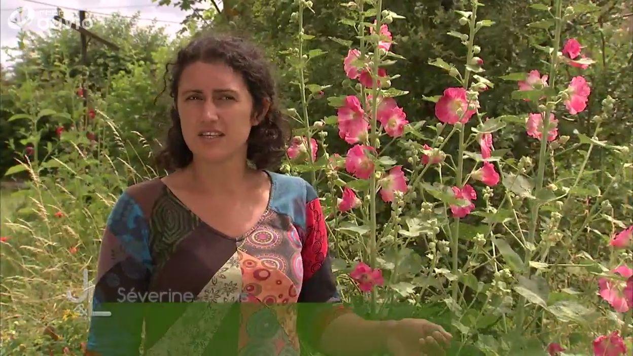 Apiflora, le jardin/pépinière de plantes mellifères