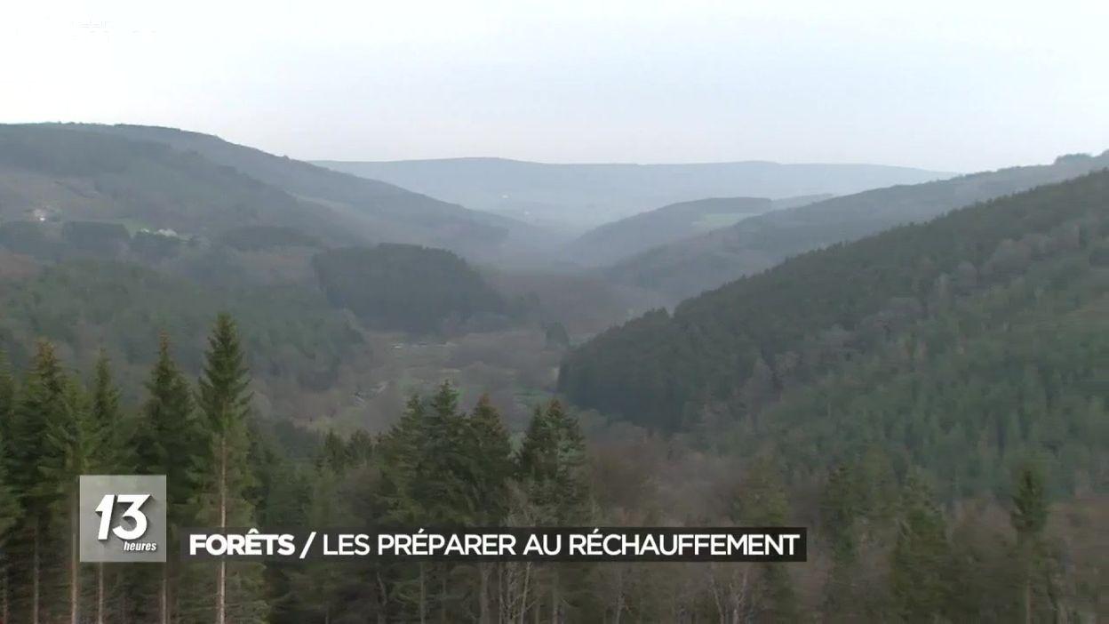 Forêts : planter des espèces résistantes au réchauffement climatique