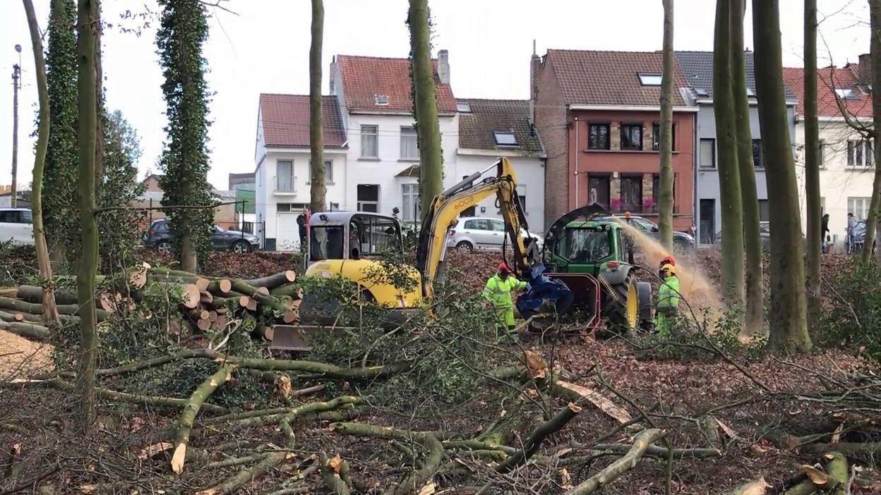 Abattage d'arbres au parc du Cheneau
