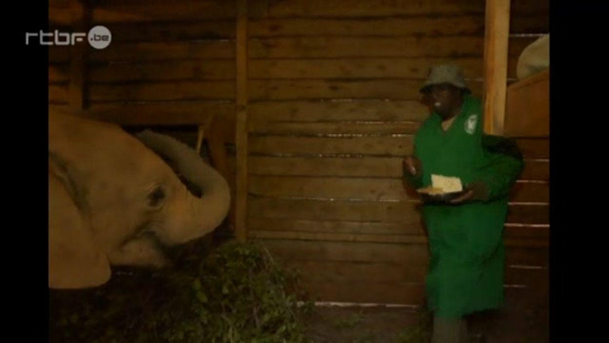 Kenya : des éléphants orphelins