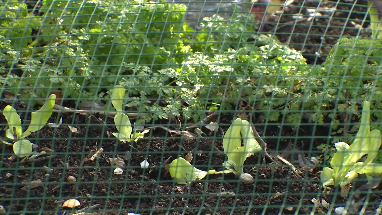 Le jardin nourricier de Patricia