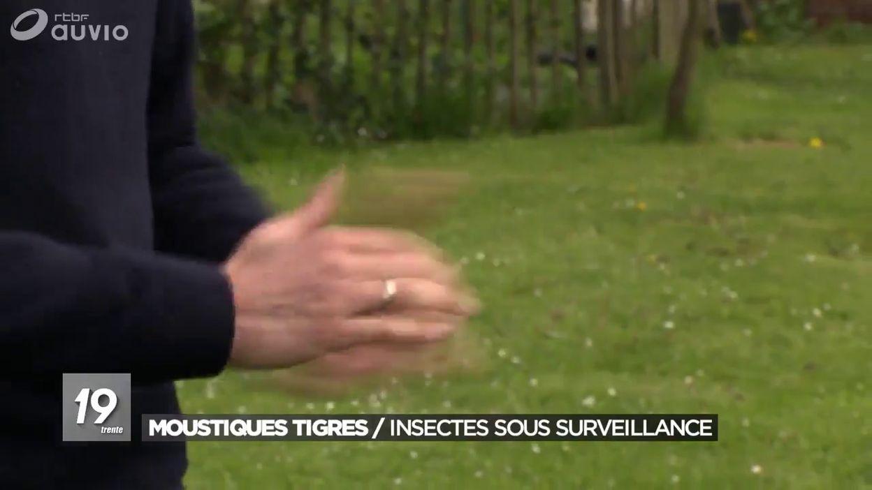 Belgique : le moustique tigre aux portes du pays
