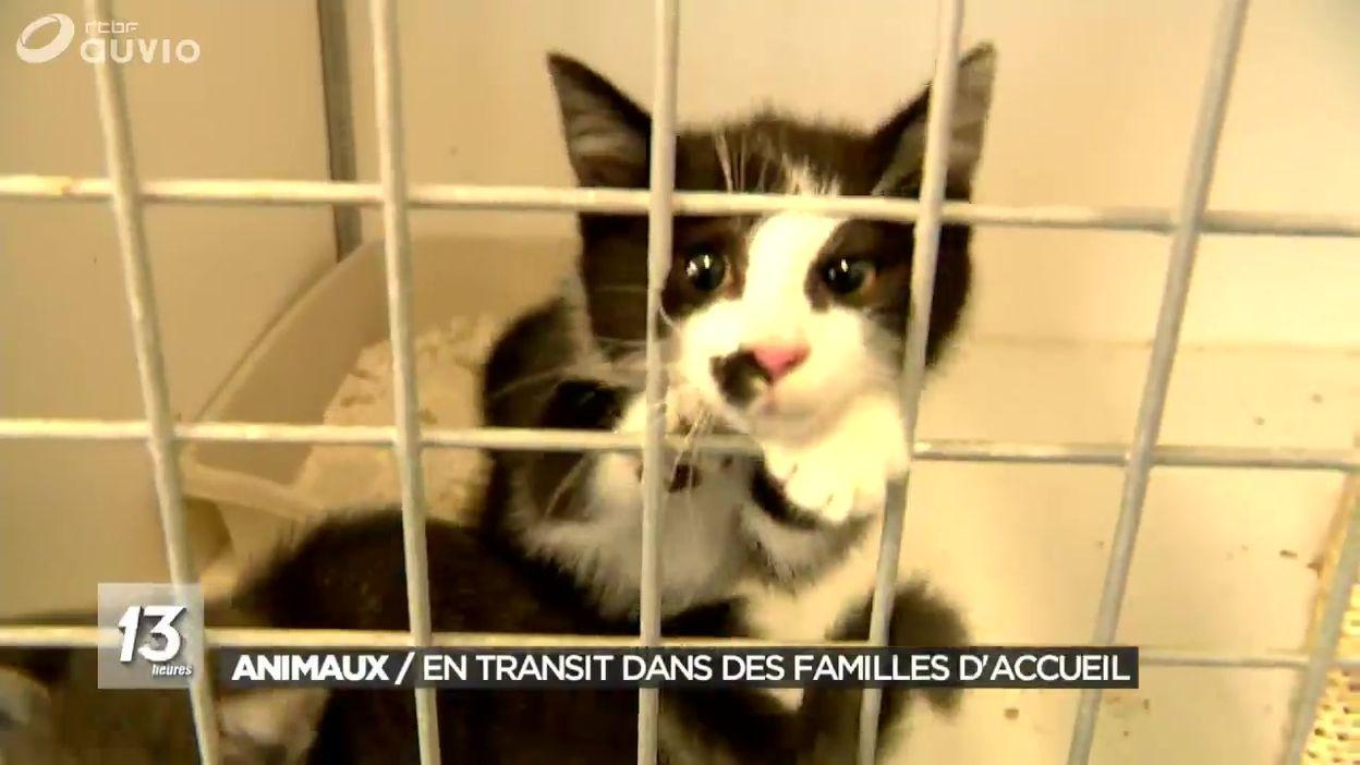 Charleroi La Spa Recherche Des Familles D Accueil Avant L Adoption