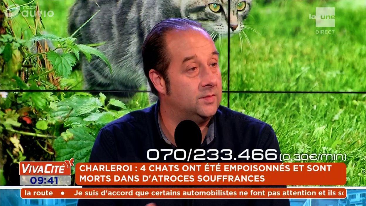 Charleroi : 4 chats ont été empoisonnés et sont morts dans d'atroces souffrances