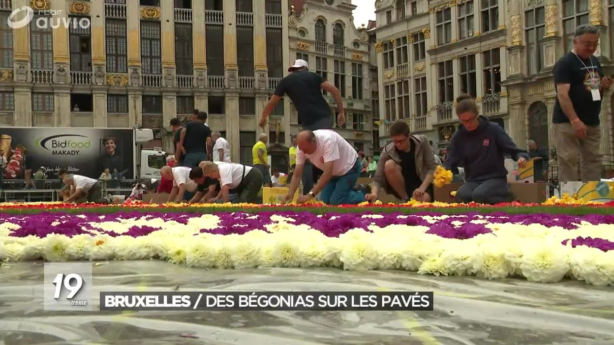 Installation du tapis de fleurs de la Grand Place de Bruxelles