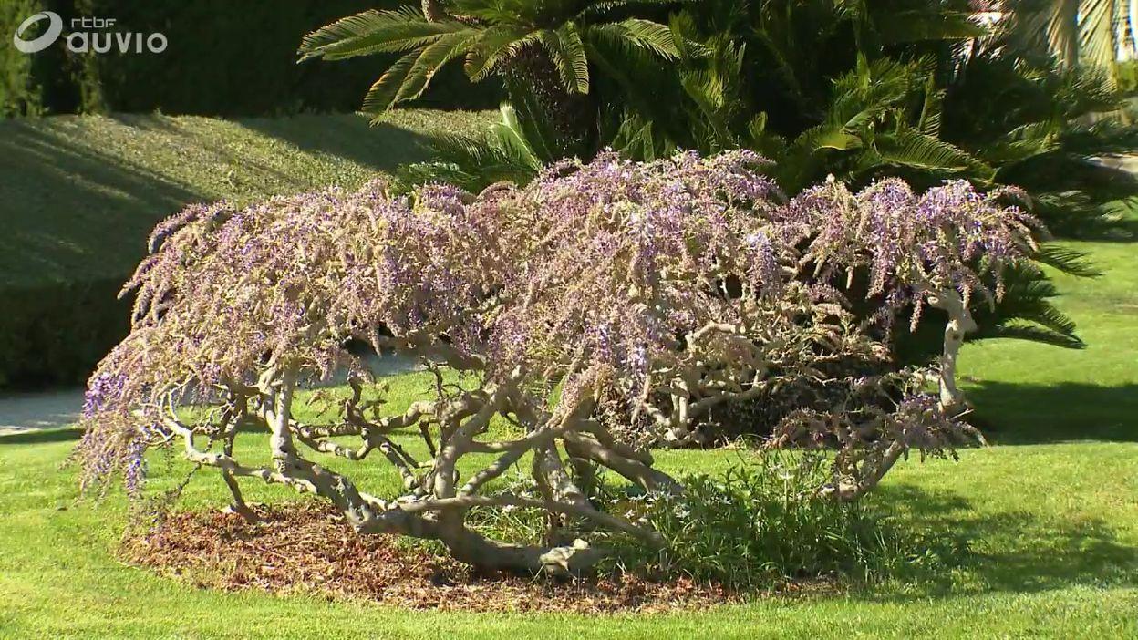 Les 9 jardins de la Villa Ephrussi de Rothschild sur la Riviera