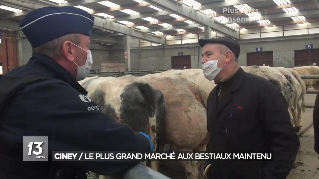 Ciney : le plus grand marché aux bestiaux est maintenu