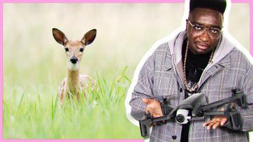 Bambi sauvé par des drones