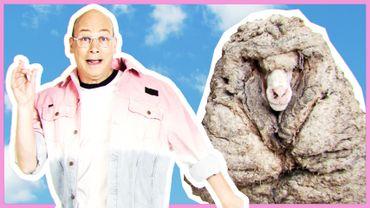 35 kilos de laine sur le dos