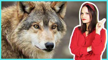Faut-il avoir peur du loup ?