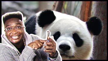 Le paradis des pandas géants