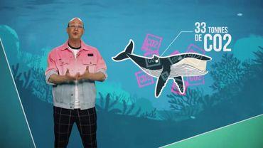 Des baleines pour sauver la planète ?