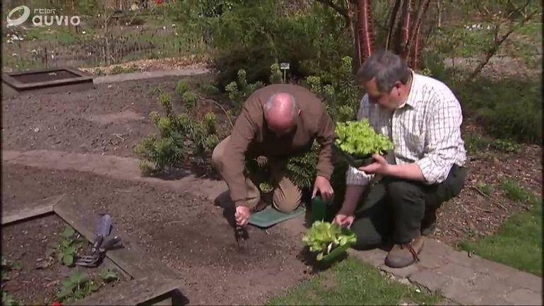 S quence potager plantation d 39 une zone de laitues for Jardins et loisirs
