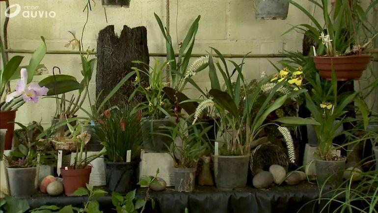luc l 39 orchidophile extrait jardins et loisirs du 25 25 02 2018. Black Bedroom Furniture Sets. Home Design Ideas