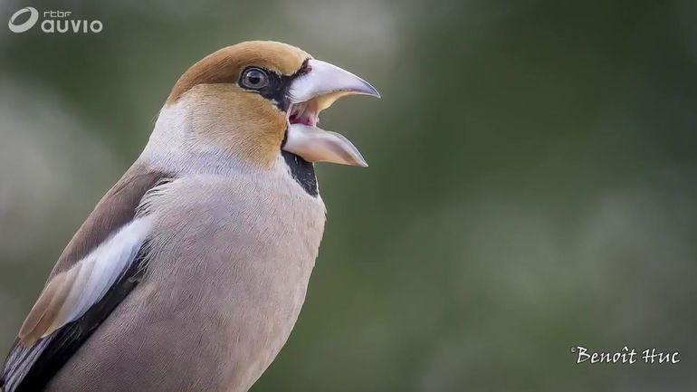 presentation-du-livre-de-benoit-huc-accueillir-les-oiseaux-au-jardin