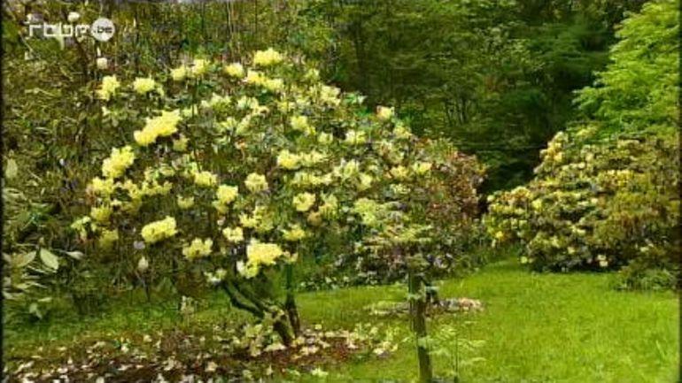 L 39 arboretum robert lenoir rendeux extrait de l for Jardin et loisir