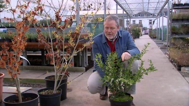 Jardins et loisirs que d 39 arbustes et de vivaces 5 40 for Jardins et loisirs
