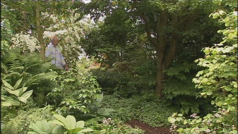 le parfum enivrant du philadelphus madrensis un arbuste de fin de printemps pour petit jardin. Black Bedroom Furniture Sets. Home Design Ideas