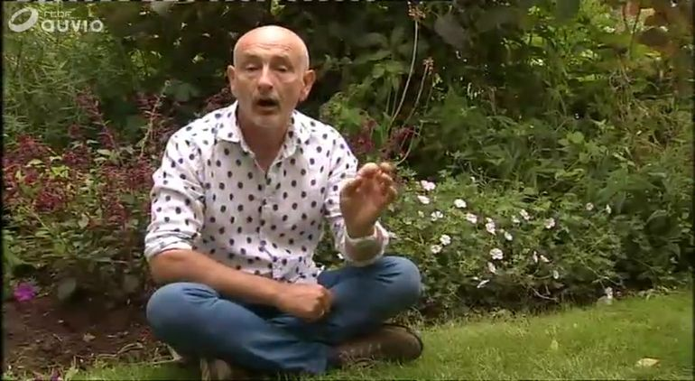francis-peeters-geranium-sanguineum-apfelblute