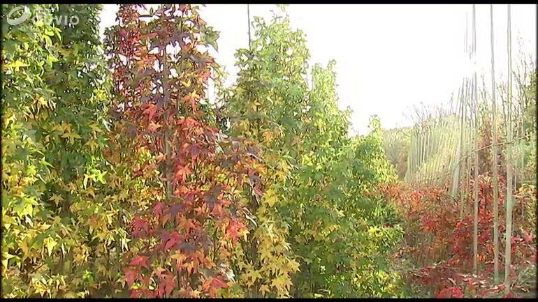 la-pepiniere-de-jo-de-martelaer-specialisee-dans-les-arbres-decoratifs-prenant-peu-de-place
