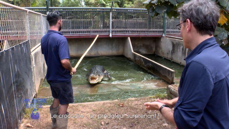 et-si-un-crocodile-marin-vous-sauvait-la-vie