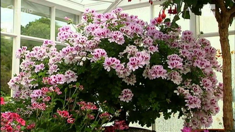 Jardins et loisirs en ecosse portmore gardens 19 40 for Jardin et loisir
