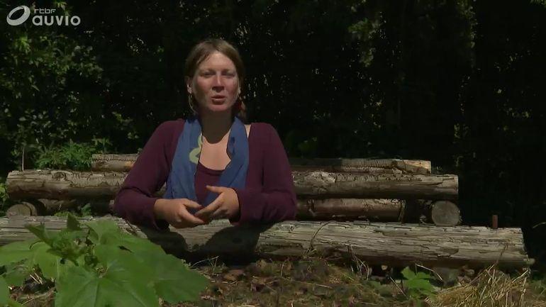 les-tisanes-simples-sauvages-de-marie-helene