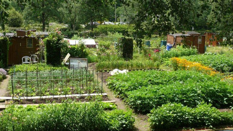 Un jardin de 25 m pour un euro par mois hainaut matin for Architecte de jardin hainaut