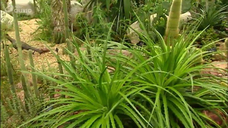 Jardins et loisirs le jardin botanique d 39 dimbourg 17 for Jardins et loisirs