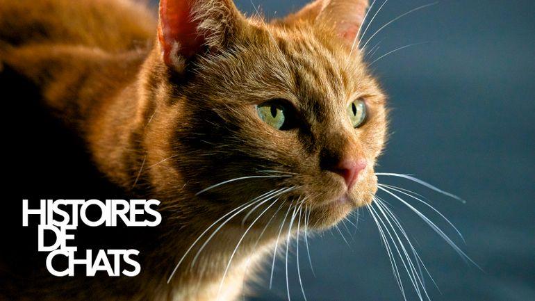 histoires-de-chats