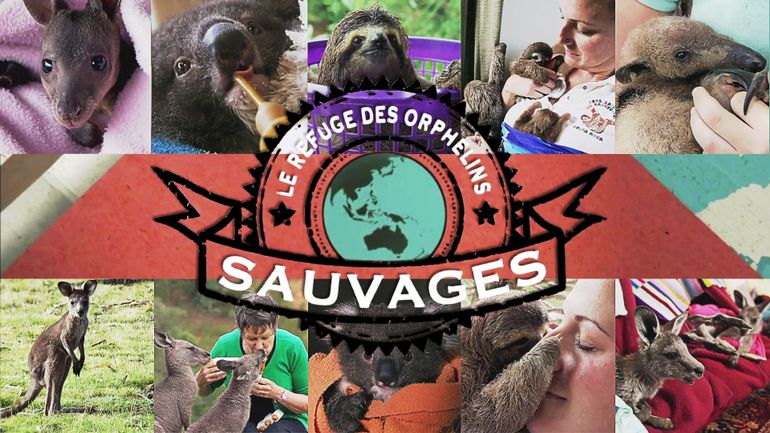 le-refuge-des-orphelins-sauvages-1-3