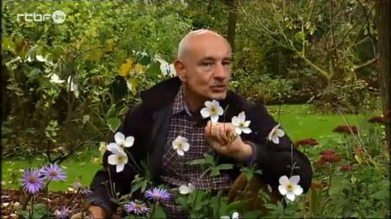 Francis peeters anemone 39 wild swan 39 extrait de l for Jardin et loisir