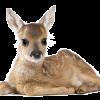 Si j'étais un animal - Si j'étais un suricate