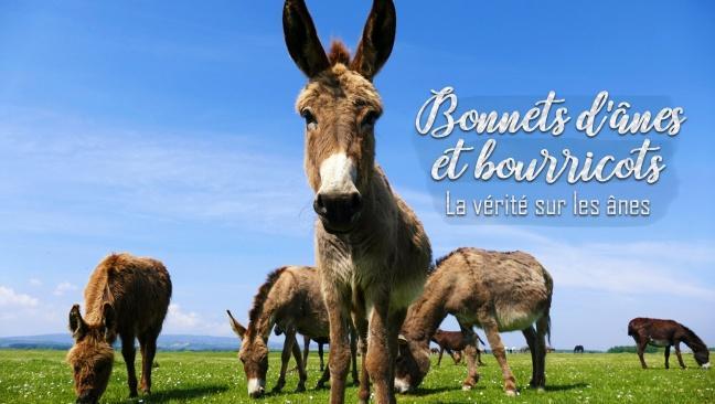 Bonnets d'ânes et bourricots, la vérité sur les ânes lazyload