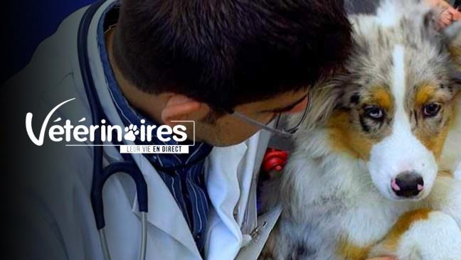 Vétérinaires, leur vie en direct lazyload