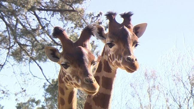 Une saison au zoo saison 6